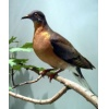 Passenger Pigeon: A Stark Reminder for Species Protection