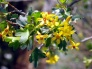 March 7: Free Native Plant Workshop